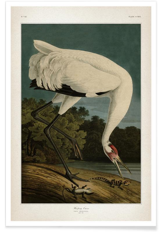 Vintage, Audubon 1 Hooping Crane Poster