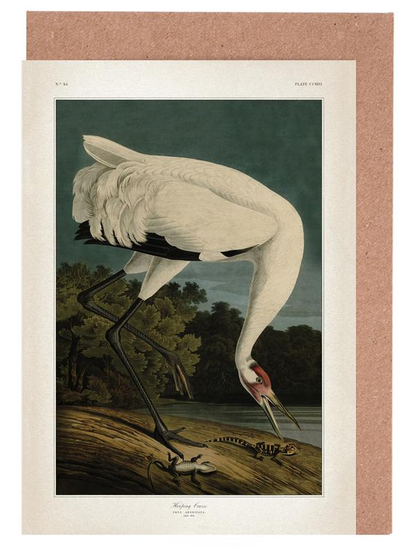 Vintage, Audubon 1 Hooping Crane -Grußkarten-Set