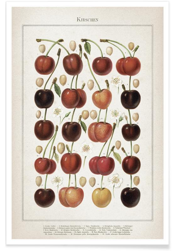 Vintage, Bessen, Meyers 6 Kirschen poster