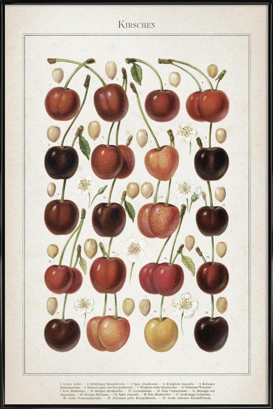Kirschen - Meyers Framed Poster
