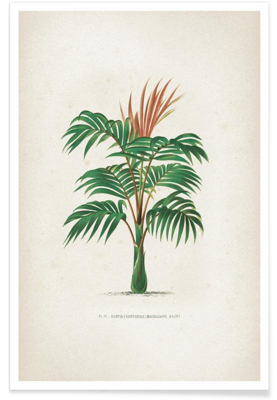 Les Palmiers 6 - Kerchove Poster