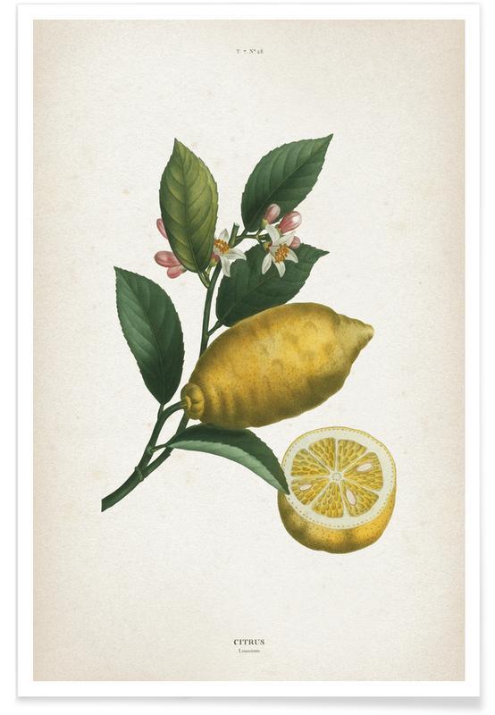 Limones, Vintage, Redouté 1 Citrus Limonium póster