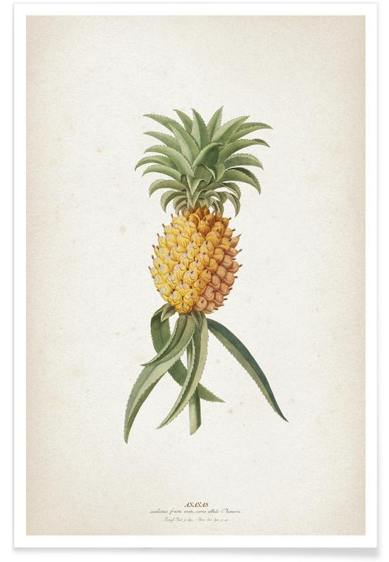 Vintage, Ananassen, Ehret 1 Ananas Aculeatus poster