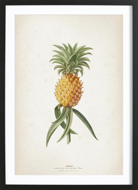 Ananas Aculeatus - Ehret affiche sous cadre en bois