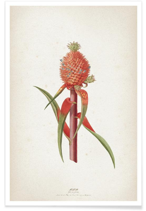Vintage, Ananassen, Ehret 1 Ananas Folio poster