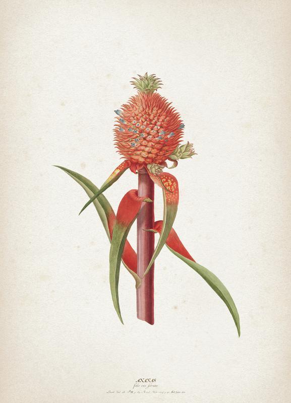 Ananas Folio - Ehret toile