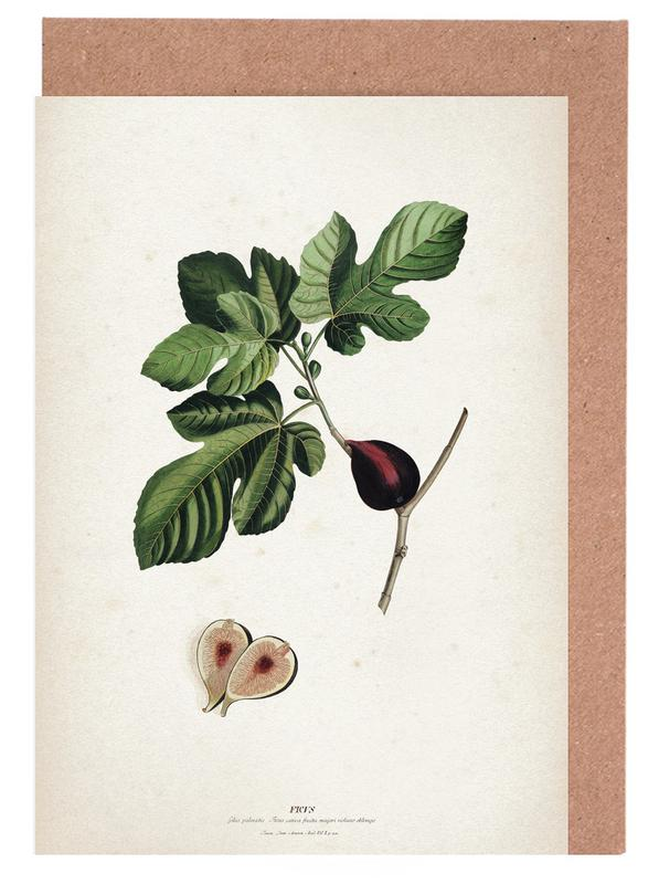 Vintage, Ehret 2 Ficus -Grußkarten-Set