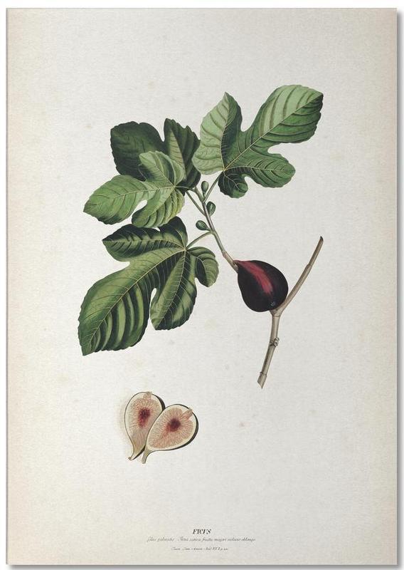 Ficus - Ehret -Notizblock