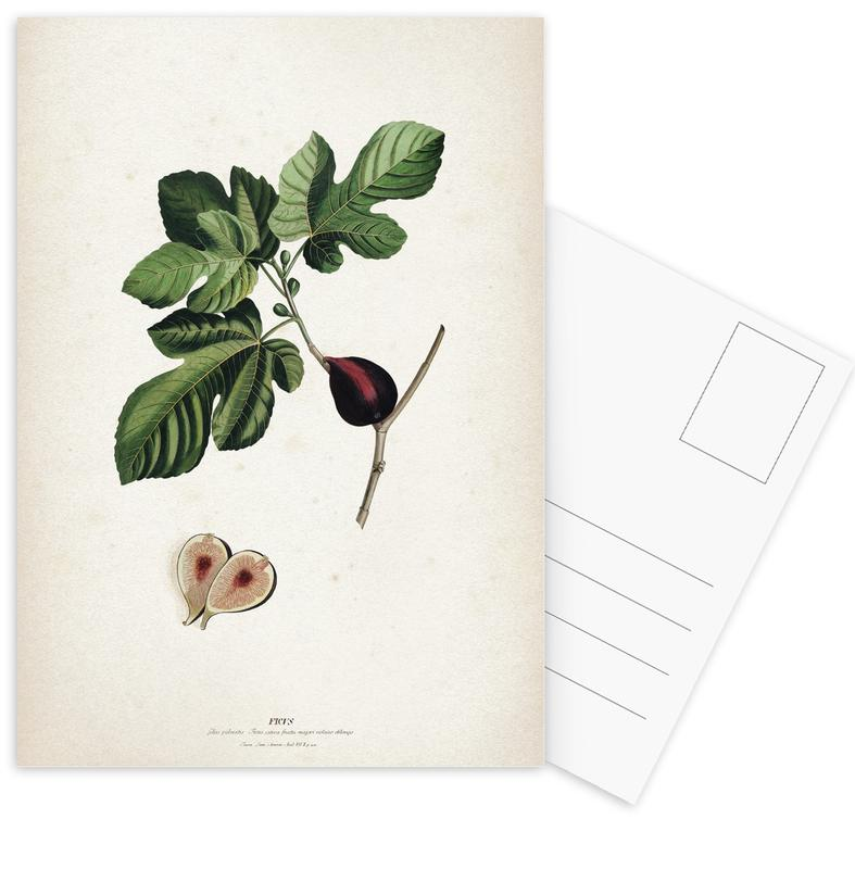 Ficus - Ehret cartes postales