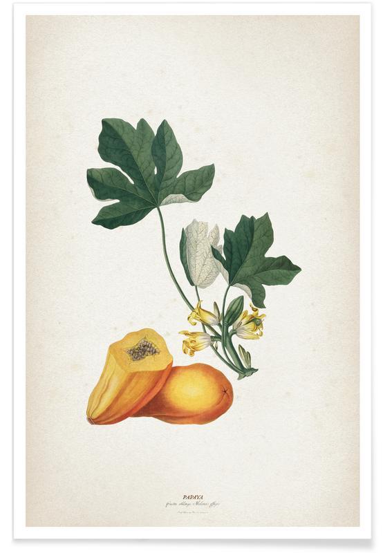 Vintage, Ehret 2 Papaya poster
