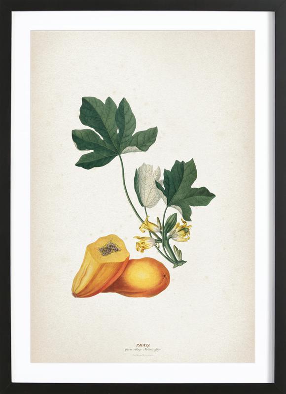 Papaya - Ehret affiche sous cadre en bois