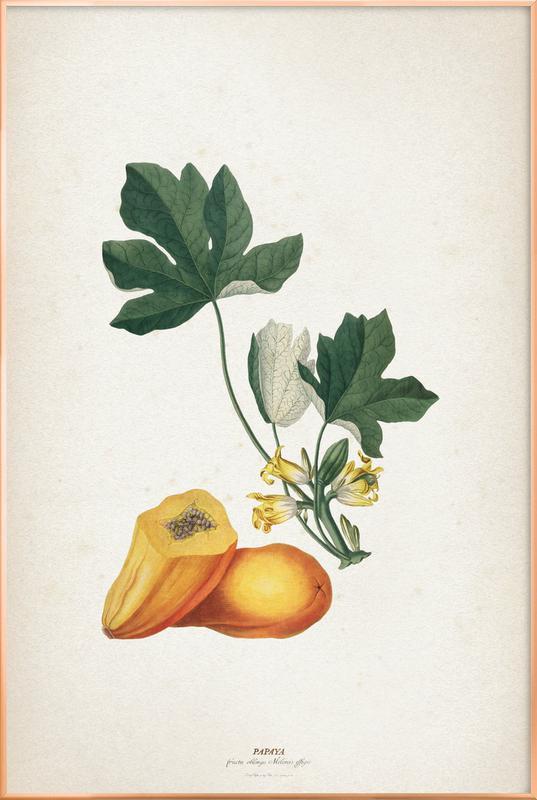 Papaya - Ehret -Poster im Alurahmen