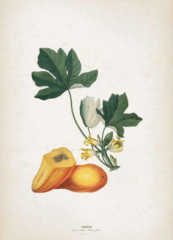 Papaya - Ehret toile