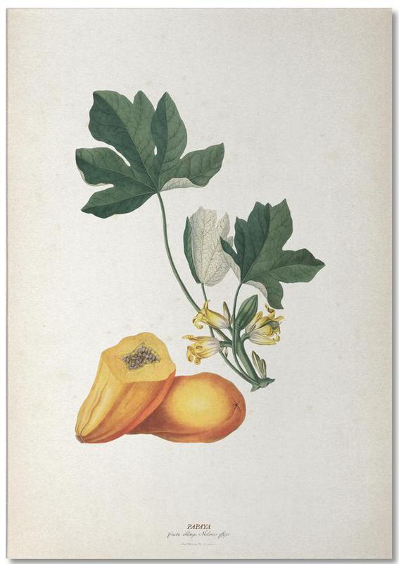 Papaya - Ehret bloc-notes