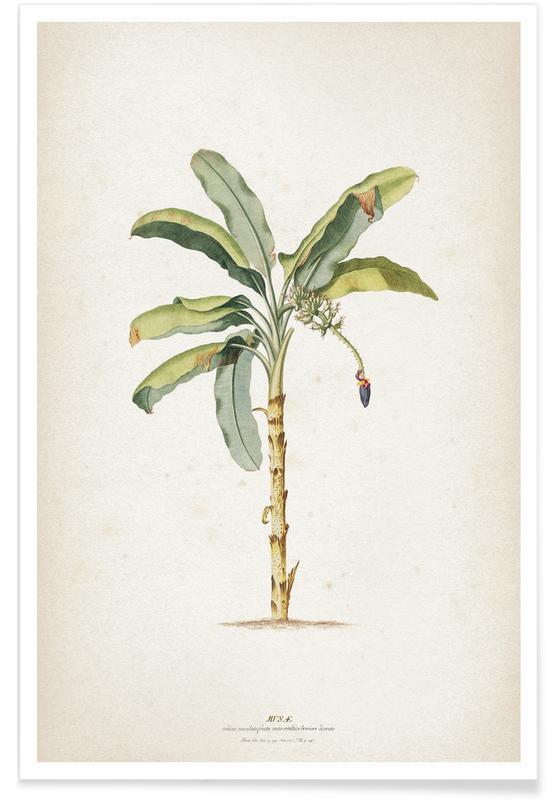 Palmbomen, Vintage, Ehret 3 Musae Maculato poster