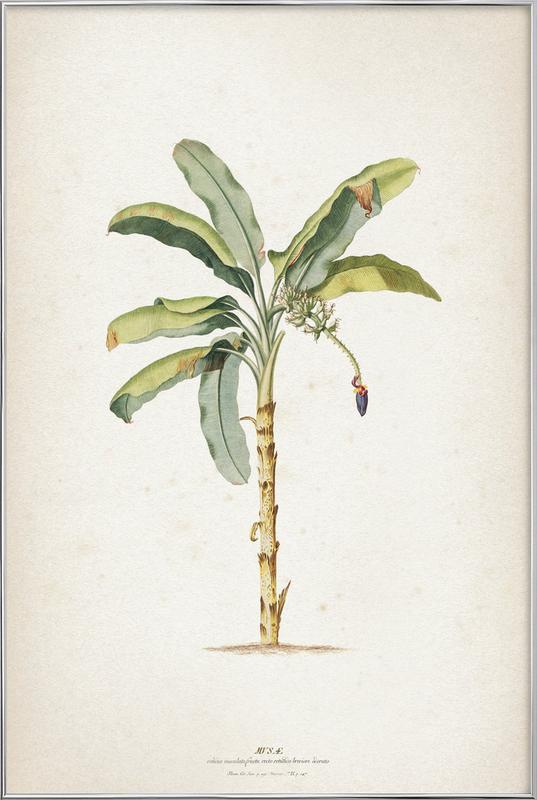Musae Maculato - Ehret -Poster im Alurahmen
