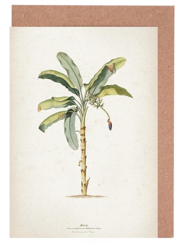 Palmen, Vintage, Ehret 3 Musae Maculato -Grußkarten-Set
