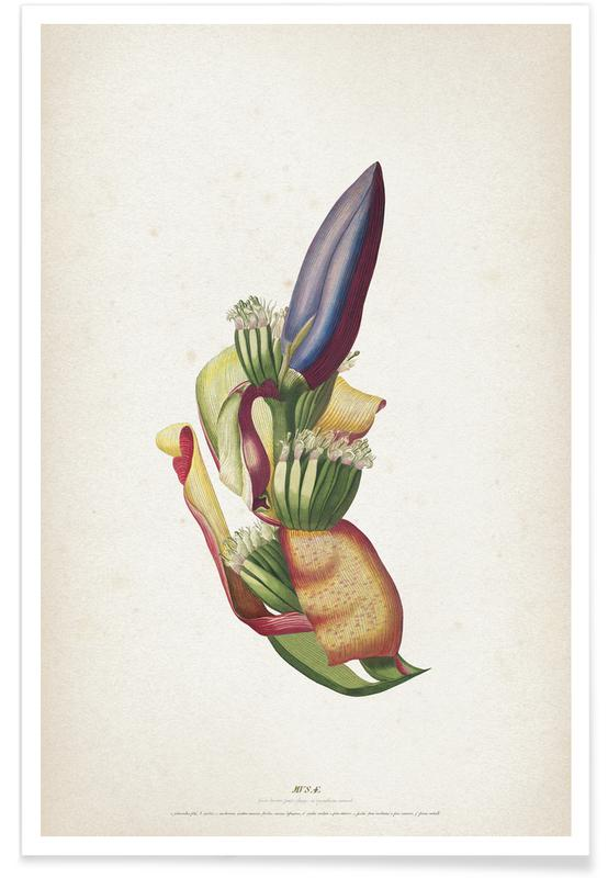 Musae Spadix - Ehret Poster
