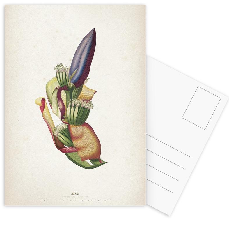 Musae Spadix - Ehret cartes postales