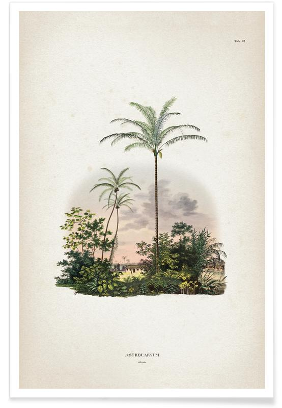 Palmas, Vintage, Astrocaryum vulgare vintage - Martius póster
