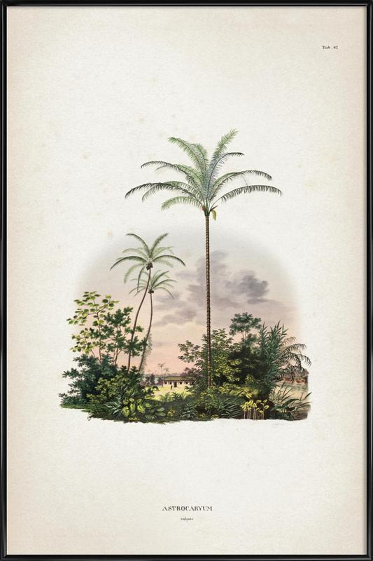 Astrocaryum Vulgare - Martius Poster i standardram