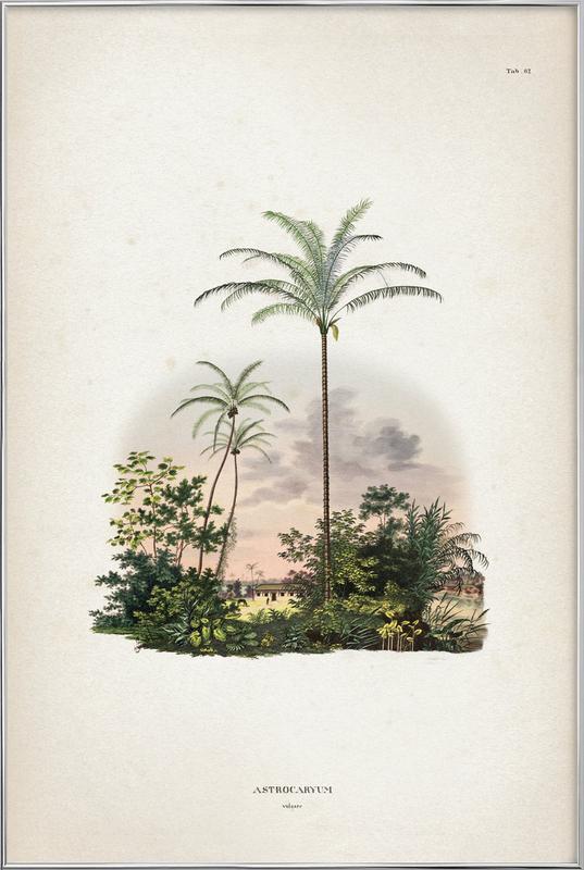 Astrocaryum Vulgare - Martius Poster i aluminiumram