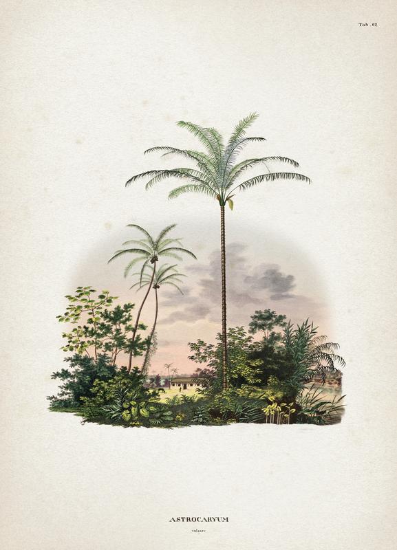 Astrocaryum Vulgare - Martius Canvastavla