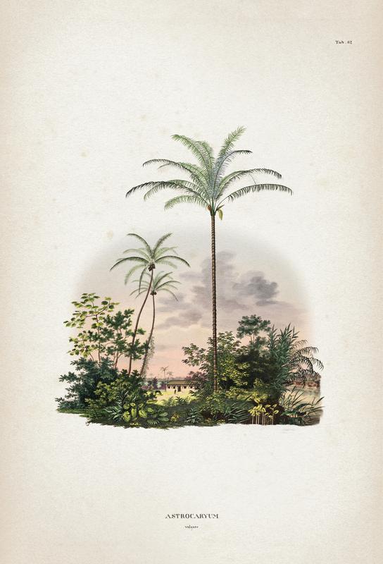 Astrocaryum Vulgare - Martius Aluminium Print