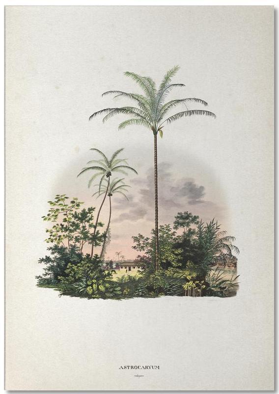Astrocaryum Vulgare - Martius bloc-notes