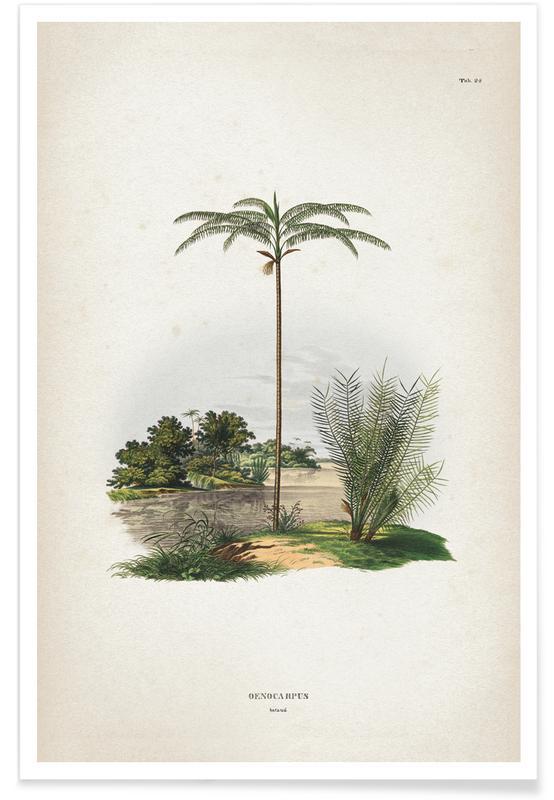 Palmiers, Vintage, Martuis 1 Oenocarpus Bataua affiche