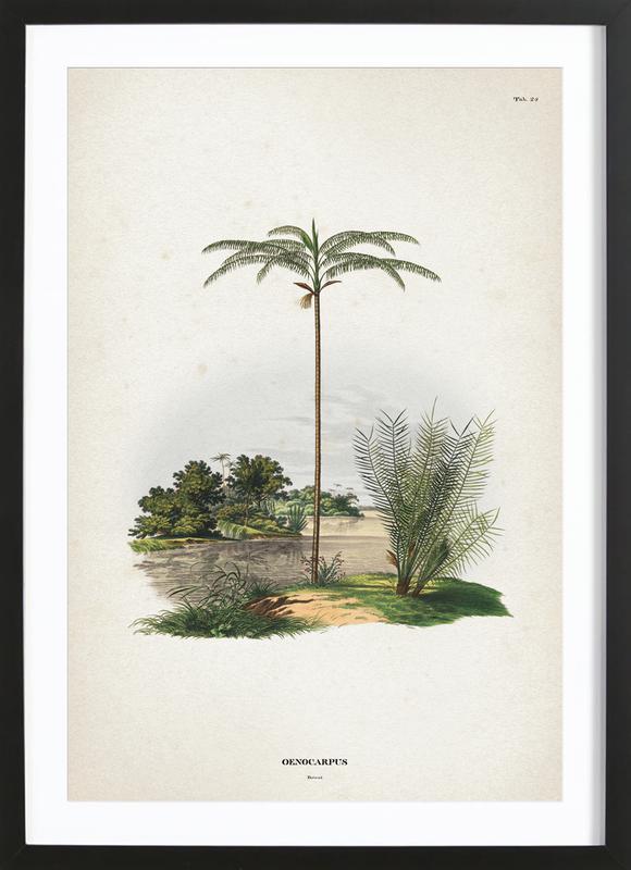 Oenocarpus Bataua - Martius -Bild mit Holzrahmen