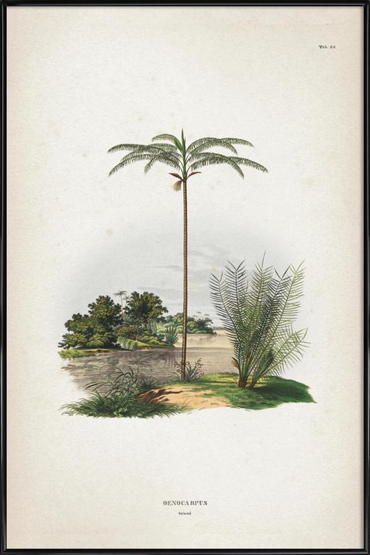 Oenocarpus Bataua - Martius affiche encadrée