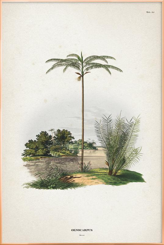 Oenocarpus Bataua - Martius affiche sous cadre en aluminium