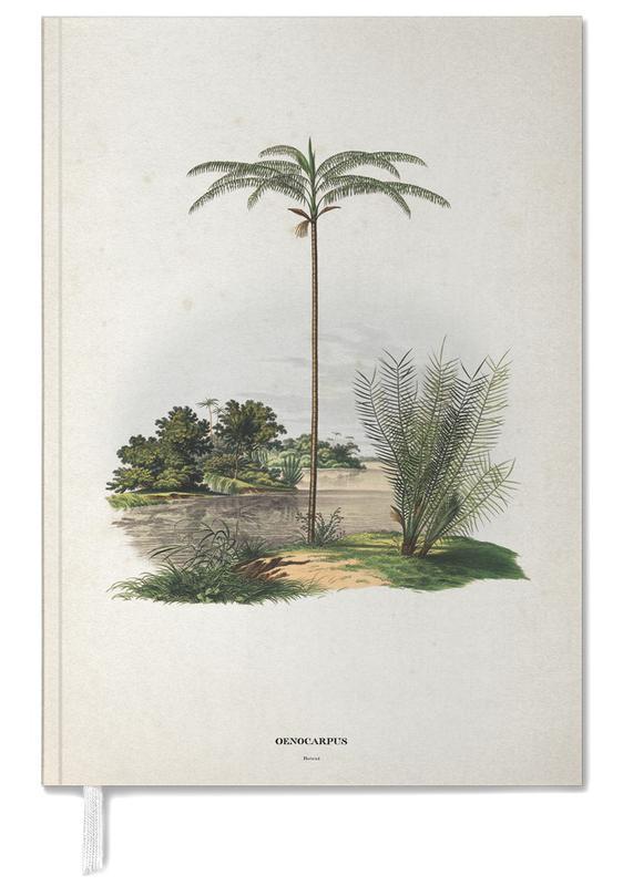 Oenocarpus Bataua - Martius agenda