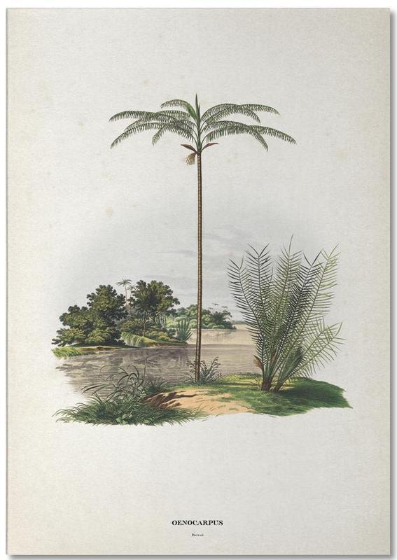 Oenocarpus Bataua - Martius -Notizblock