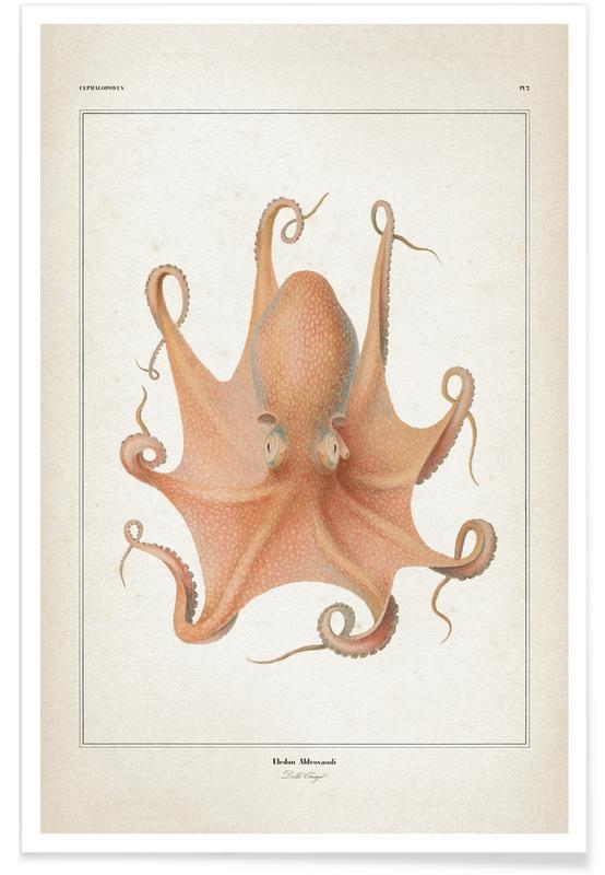 Blæksprutter, Vintage, Vérany 1 Eledon Aldrovandi Plakat