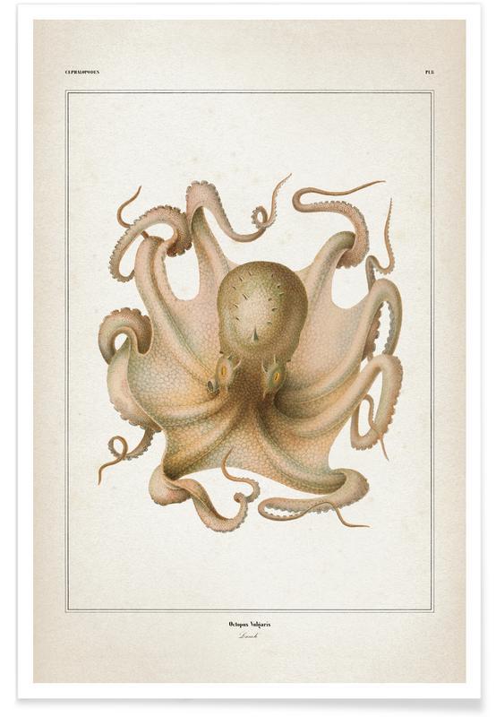 Blæksprutter, Vintage, Octopus Vulgaris - Vérany Plakat