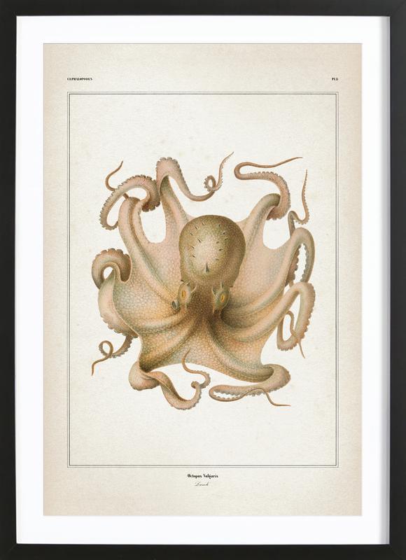 Octopus Vulgaris - Vérany -Bild mit Holzrahmen