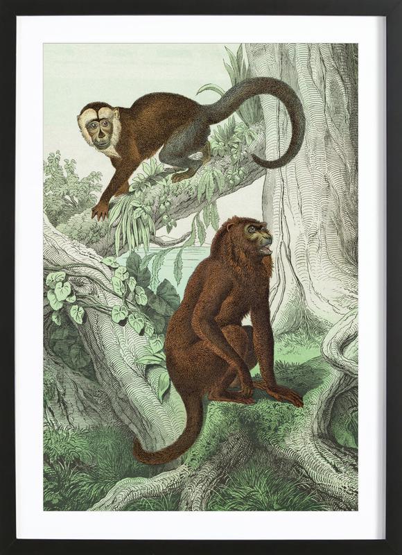 Affen 3 - Schubert Framed Print
