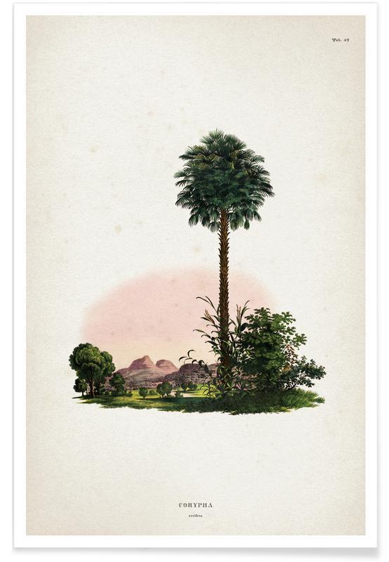 Palmiers, Vintage, Martius 1 Corypha Cerifera affiche