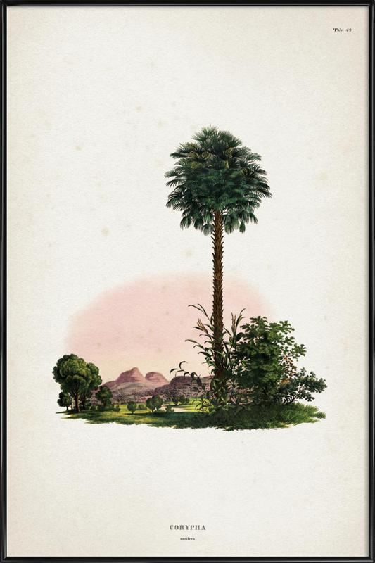 Corypha Cerifera - Martius affiche encadrée
