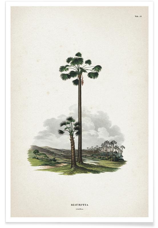 Mauritia Vinifera - Martius Poster