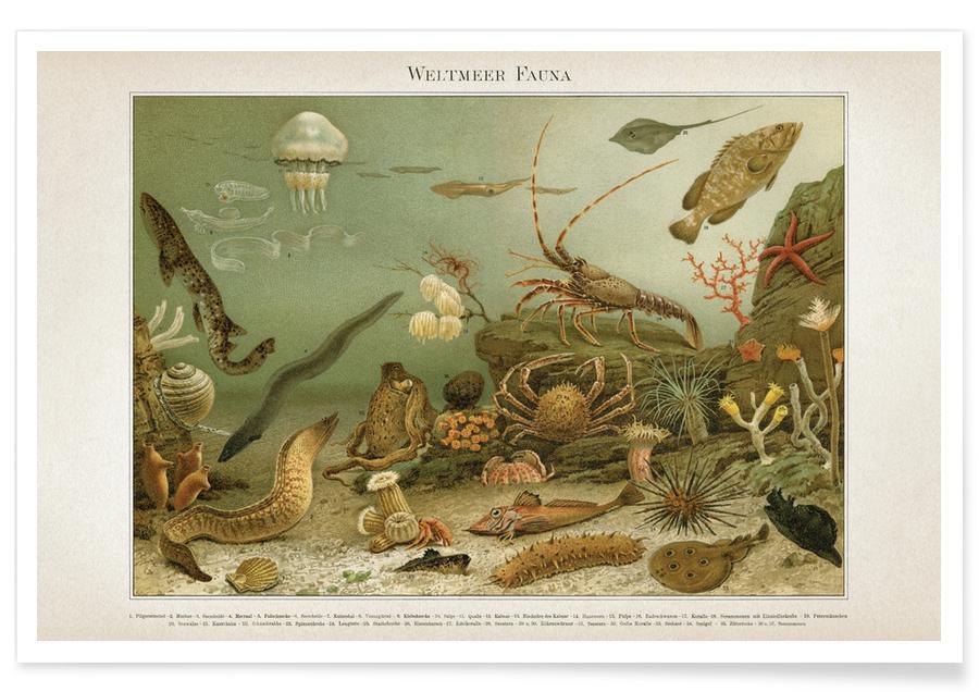 Vintage, Meyers 4 Weltmeer Fauna Poster
