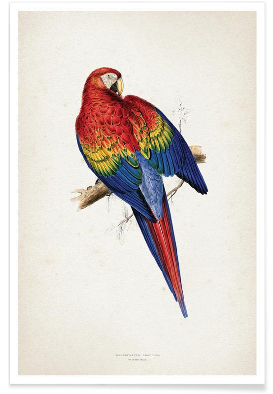 Macrocercus Aracanga - Lear -Poster