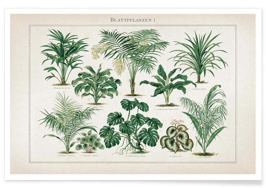 Leaves & Plants, Vintage, Meyers 1 Blattpflanzen 1 Poster