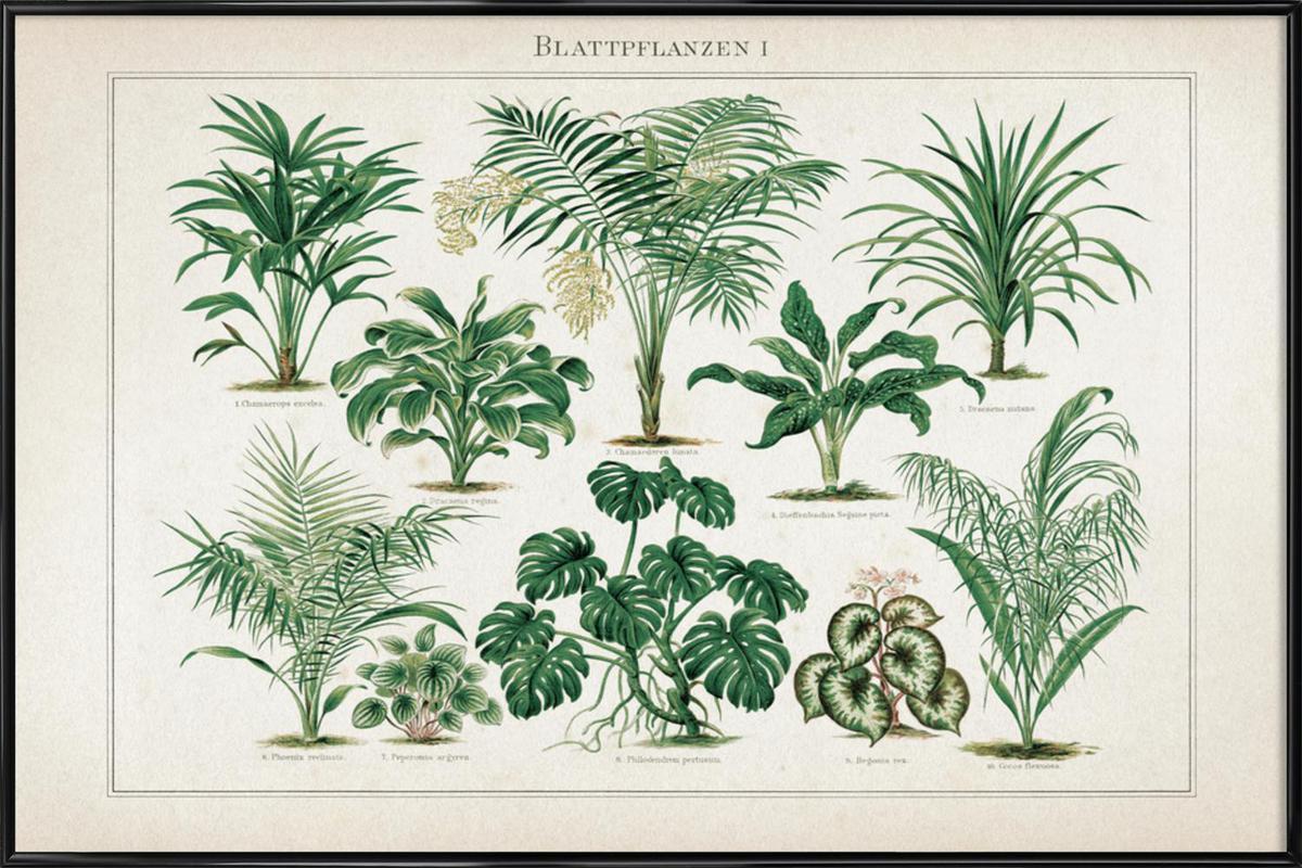 Blattpflanzen 1 - Meyers affiche encadrée