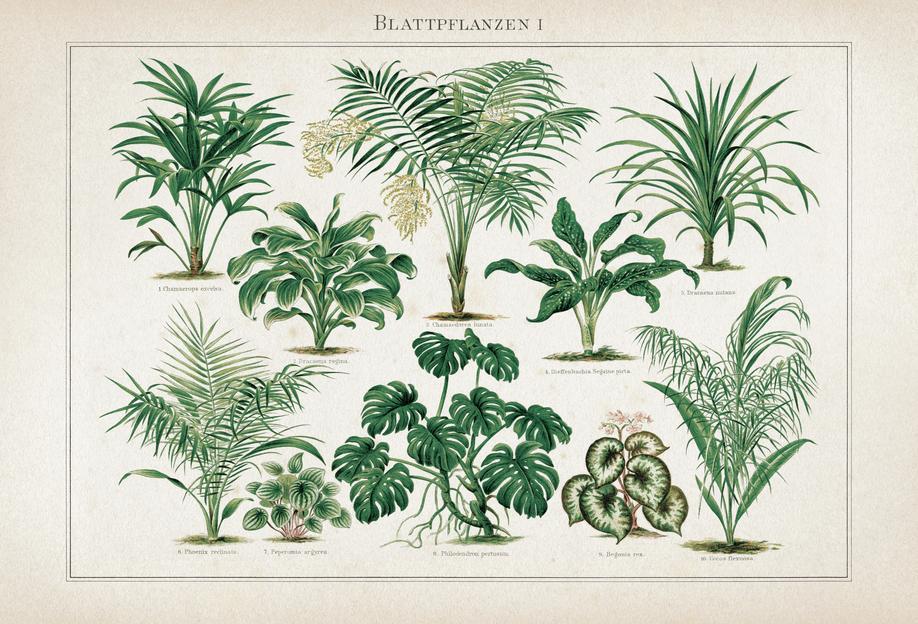 Blattpflanzen 1 - Meyers -Alubild