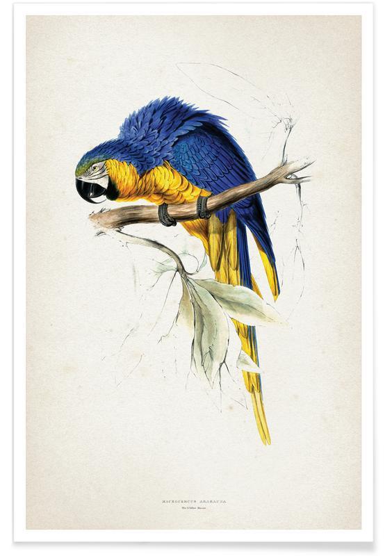 Perroquets, Vintage, Lear 1 Macrocerus Ararauna affiche
