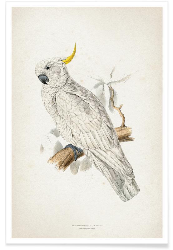 Perroquets, Vintage, Lear 1 Plyctolophus Galeritus affiche