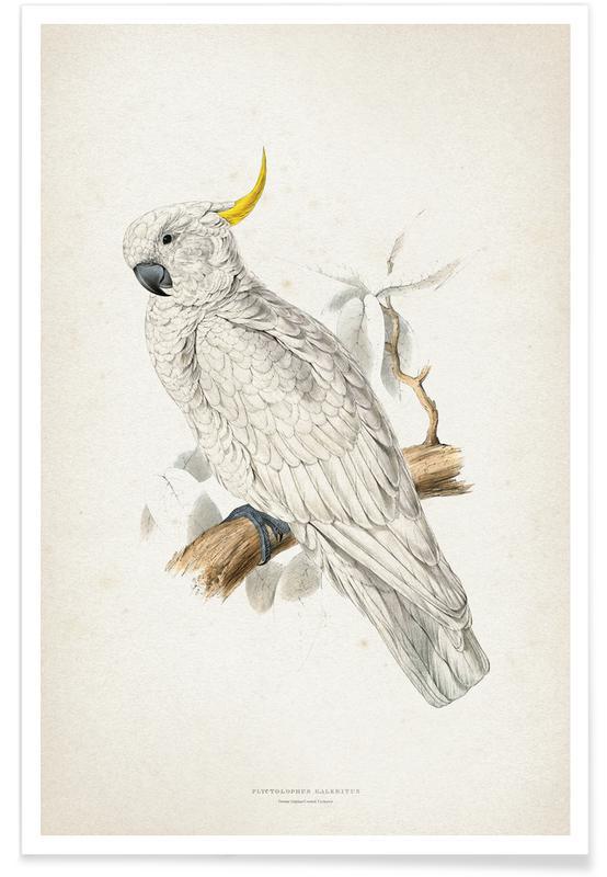 Plyctolophus Galeritus - Lear poster